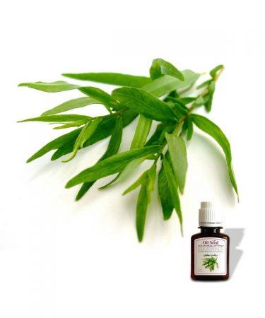 روغن ترخون | روغنهای خاص گیاهی خالص